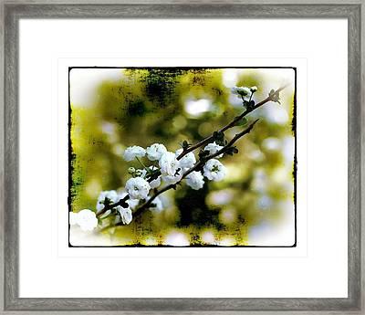 Spring Bough Framed Print by Judi Bagwell