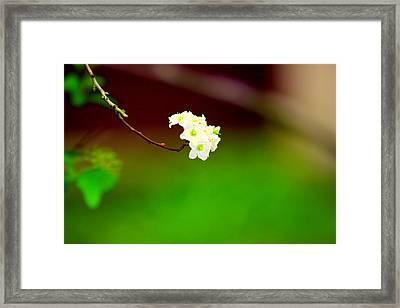 Spring Bud Framed Print by Bret Worrell