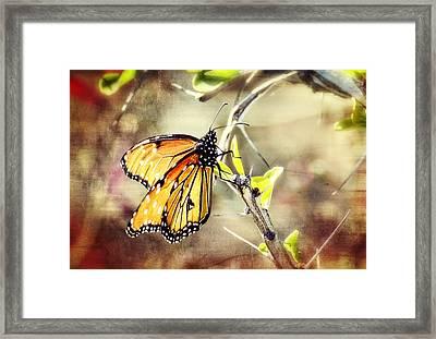 Spring Butterflies  Framed Print