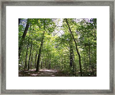 Framed Print featuring the photograph Spring Canopy by Sheila Silverstein