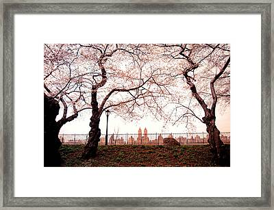 Spring Cherry Blossoms - Central Park Reservoir Framed Print by Vivienne Gucwa