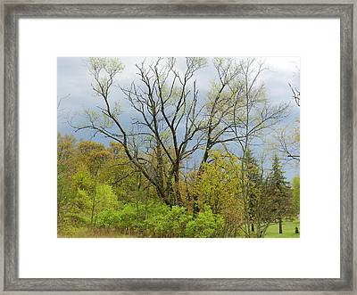 Spring Contrast Framed Print by Dennis Leatherman