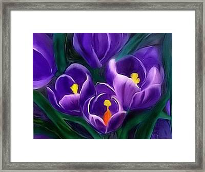 Spring Crocus Framed Print by Alethea McKee