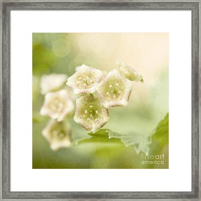 Spring Currant Blossom Framed Print