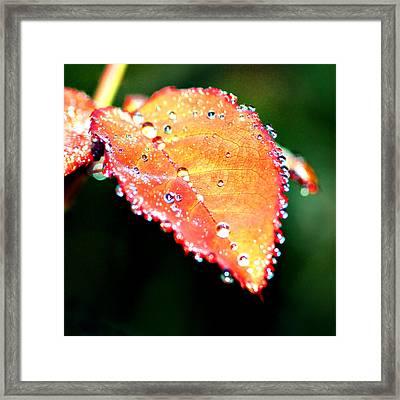 Spring Dew Framed Print by Michelle Joseph-Long