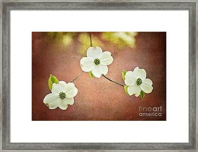Framed Print featuring the photograph Spring Dogwood Blooms by Cheryl Davis