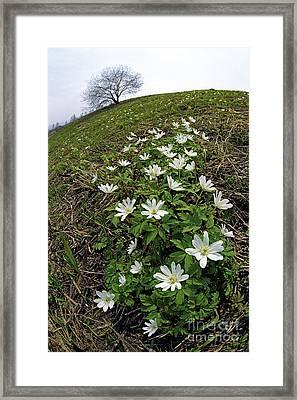 Spring  Framed Print by Elena Filatova