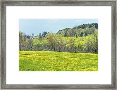 Spring Farm Landscape With Dandelion Bloom In Maine Photograph Framed Print