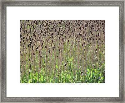Spring Field Framed Print by Alfred Ng