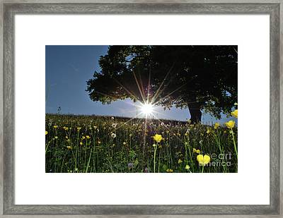 Spring Field Framed Print by Bruno Santoro