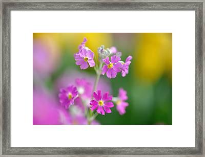 Spring Flower Framed Print by Myu-myu