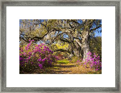 Spring Flowers Charleston Sc Azalea Blooms Deep South Landscape Photography Framed Print by Dave Allen
