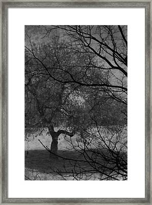 Spring For Leaves  Framed Print by Jerry Cordeiro