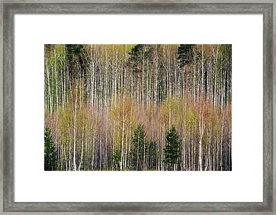 Spring Forest Lace Framed Print by Vladimir Kholostykh
