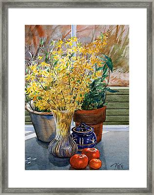 Spring Forthysia Framed Print by Peter Sit