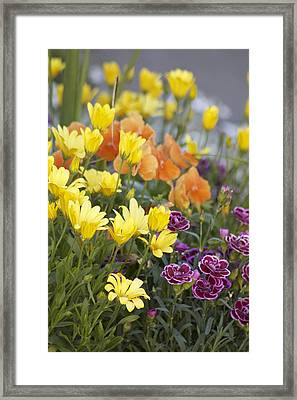 Framed Print featuring the photograph Spring  Garden by Sylvia Hart
