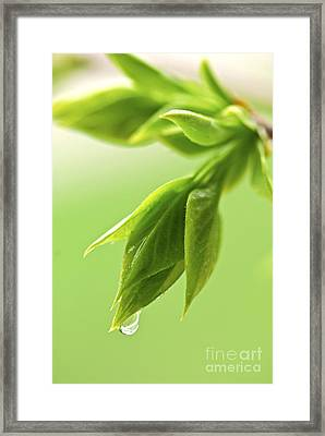Spring Green Leaves Framed Print by Elena Elisseeva