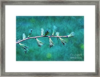 Spring Has Sprung Framed Print by Aimelle