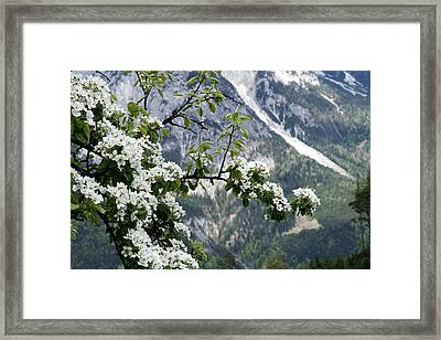 Spring In Alps Framed Print by Sola Deo Gloria