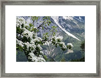 Spring In Alps Framed Print