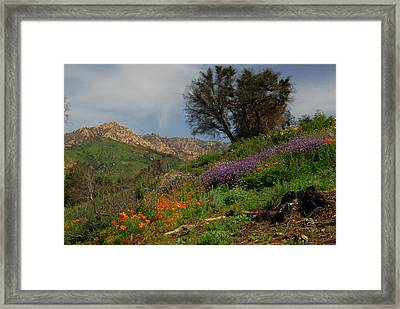 Framed Print featuring the photograph Spring In Santa Barbara by Lynn Bauer