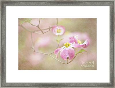 Framed Print featuring the photograph Spring Inspiration by Cheryl Davis
