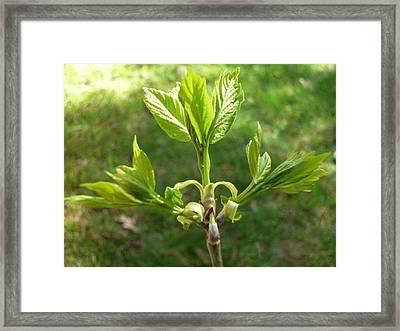 Spring Leaves Framed Print by Pamela Turner