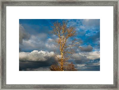 Spring Light In Autumnal Day Framed Print by Jenny Rainbow