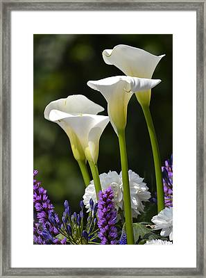 Spring Lillies Framed Print by Dickon Thompson
