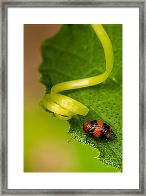 Spring Loaded Framed Print