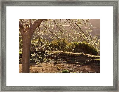 Spring Morning Light Framed Print