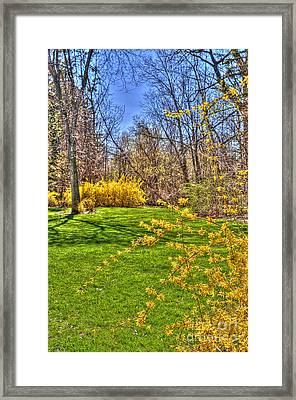 Spring Of Joy Framed Print by Anca Jugarean