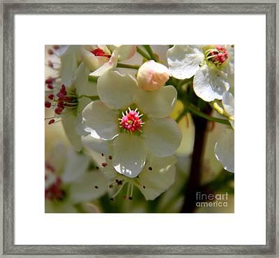 Spring Opening Framed Print