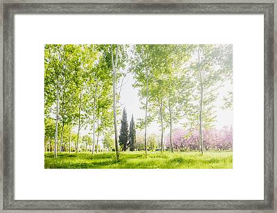 Spring Park Framed Print by Evgeni Dinev