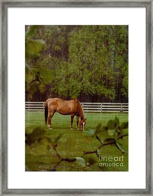 Spring Pasture 2 Framed Print