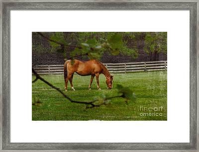 Spring Pasture Framed Print