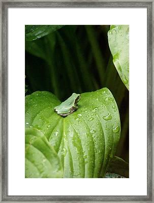 Spring Peeper Framed Print