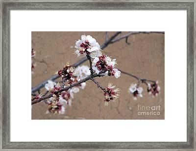 Spring Promises Framed Print