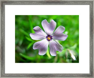 Spring Purple Framed Print