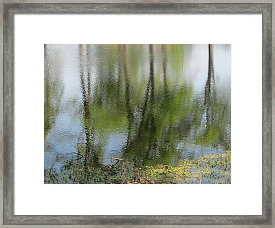 Spring Reflections Framed Print by Valia Bradshaw