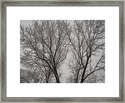 Spring Snow Framed Print by Suzanne Fenster