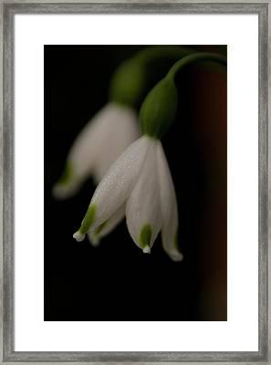 Spring Snowflake Framed Print