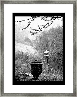 Framed Print featuring the photograph Spring Snowstorm 2012 by Susanne Still