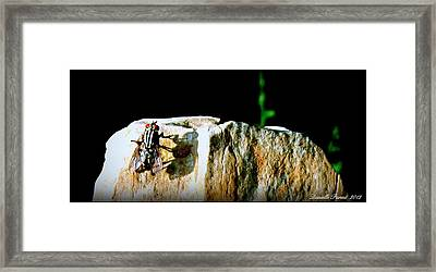 Framed Print featuring the photograph Spring Sunbath  by Danielle  Parent