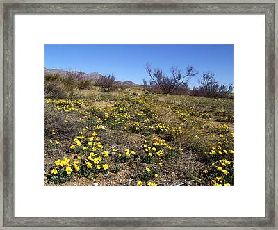 Spring Surprise Franklin Mountains Framed Print by Kurt Van Wagner