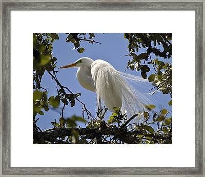 Spring Time Beauty Framed Print