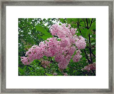 Spring Time Framed Print by Kristen Pagliaro