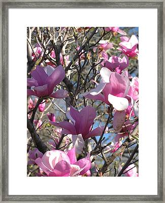 Spring Time Revisited Framed Print by Shawn Hughes