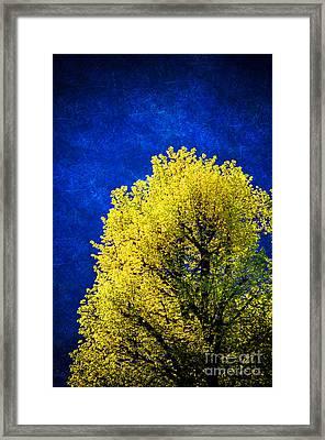 Spring Tree Framed Print by Silvia Ganora