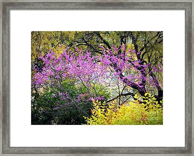 Spring Trees In San Antonio Framed Print